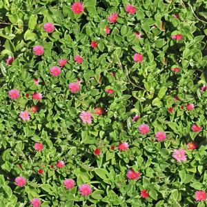 grass-texture (29)
