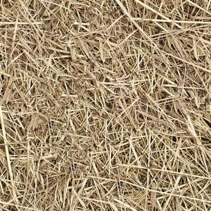 grass-texture (34)
