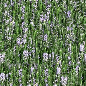 grass-texture (35)