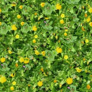 grass-texture (36)