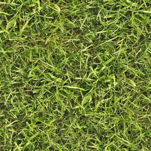 grass-texture (39)
