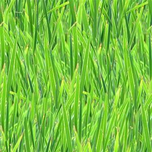 grass-texture (41)