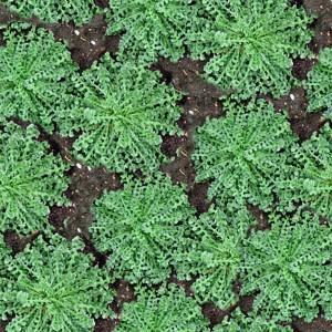 grass-texture (43)