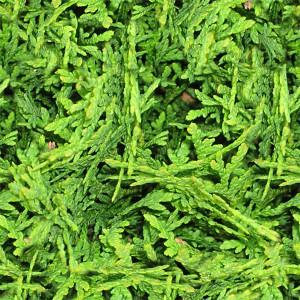 grass-texture (46)