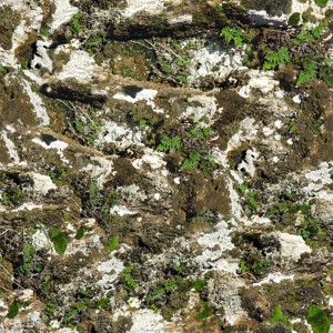 grass-texture (47)