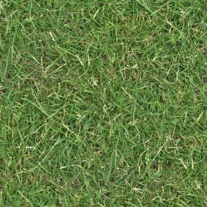 grass-texture (48)