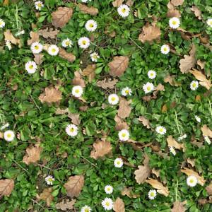 grass-texture (52)