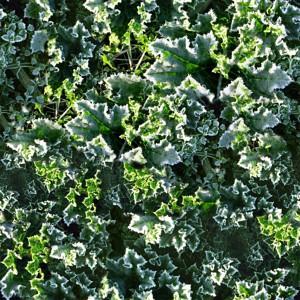 grass-texture (54)
