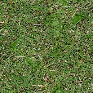 grass-texture (56)