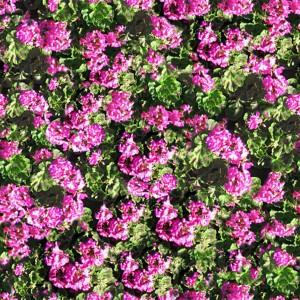grass-texture (57)