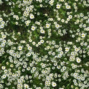 grass-texture (58)