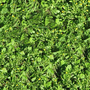 grass-texture (70)