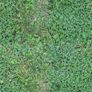 grass-texture (74)