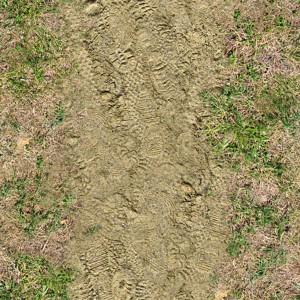 grass-texture (77)