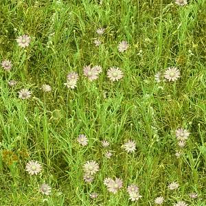 grass-texture (8)