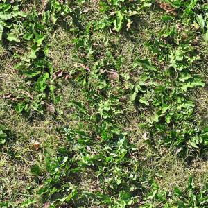 grass-texture (82)