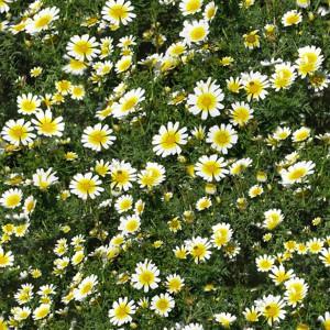 grass-texture (85)