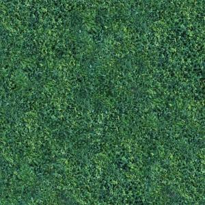 grass-texture (86)