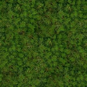grass-texture (90)