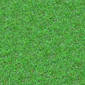 grass-texture (96)