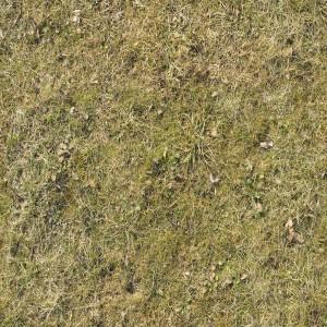 ground-texture (10)
