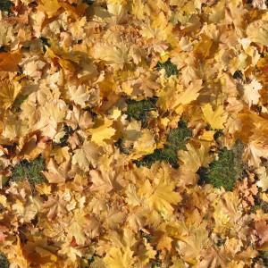 ground-texture (21)