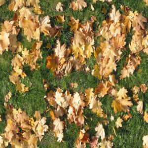 ground-texture (23)