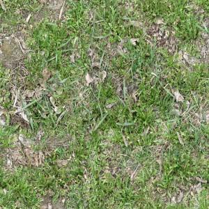 ground-texture (6)