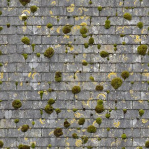 roof-texture (20)