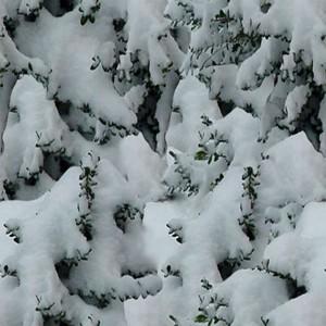 snow-texture (27)