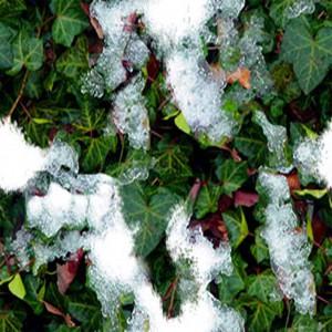 snow-texture (38)