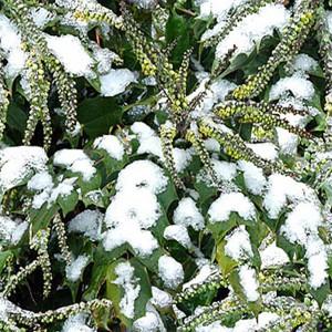 snow-texture (46)
