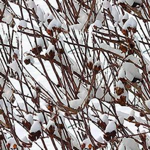 snow-texture (87)
