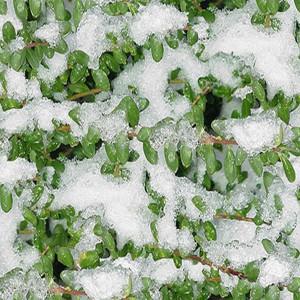 snow-texture (88)