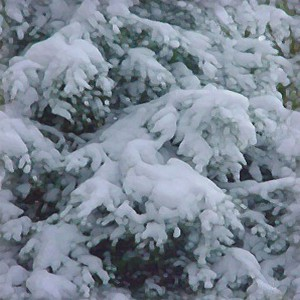 snow-texture (96)